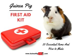 Guinea Pig First Aid Kit 23 Essential Items & How to Make