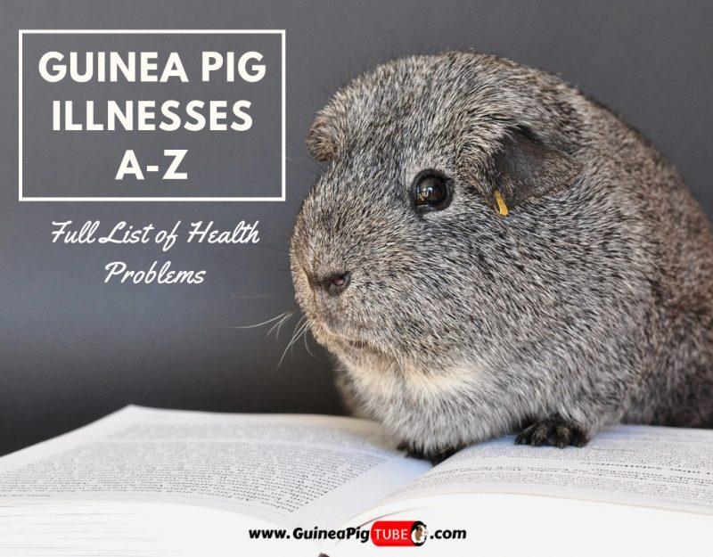 Guinea Pig Illnesses A-Z (Full List of Health Problems)