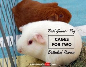 Top 5 Best Guinea Pig Cages for 2 in 2019 - Detailed Review