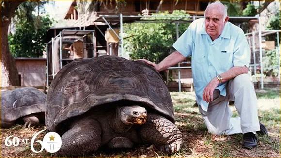 Image result for big tortoise