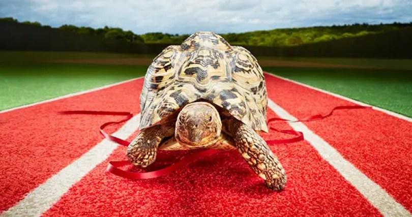 tartaruga mais rápida