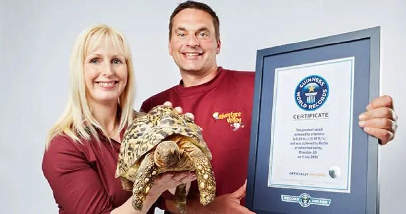 Bertie World's Fastest Tortoise