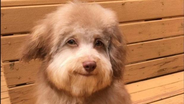 nori-perro