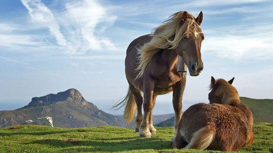 """Enzo Crotti: """"Horse Rancing"""" (composizione originale per chitarra classica)"""