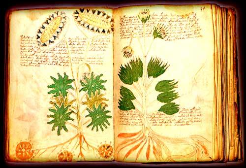 el_manuscrito_voynich_1big.jpg