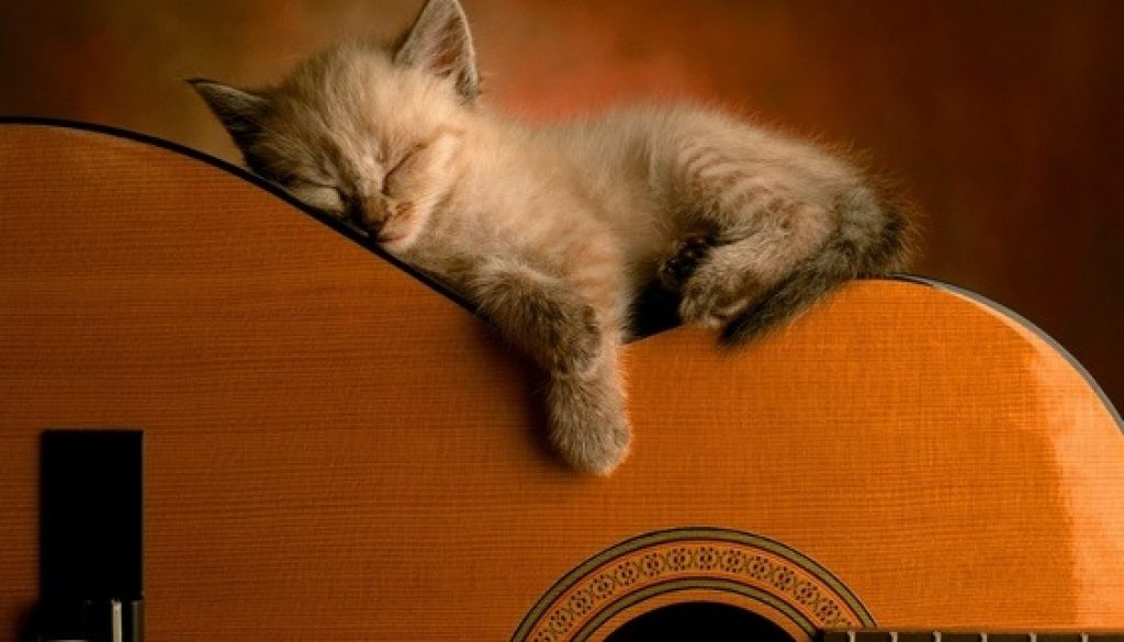 cat guitar ile ilgili görsel sonucu