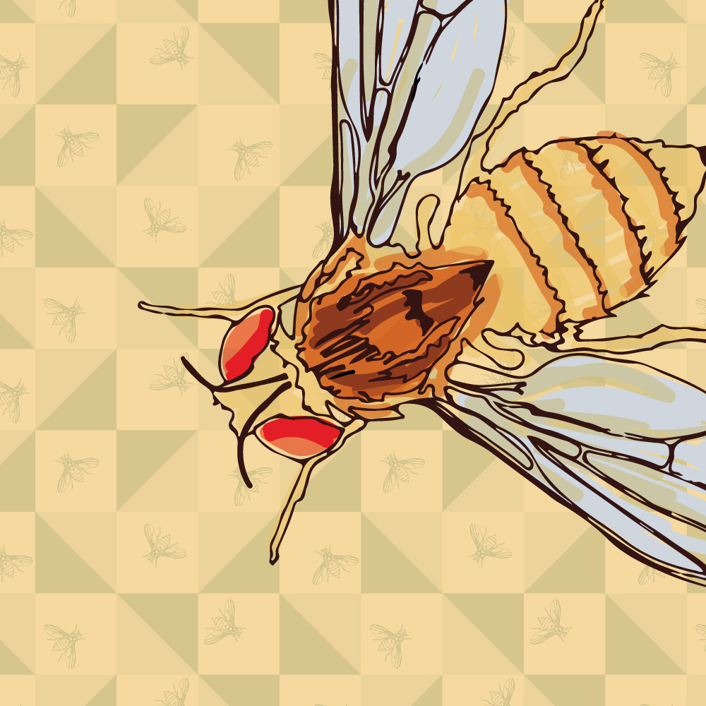 Illustration and pattern for FlyLab