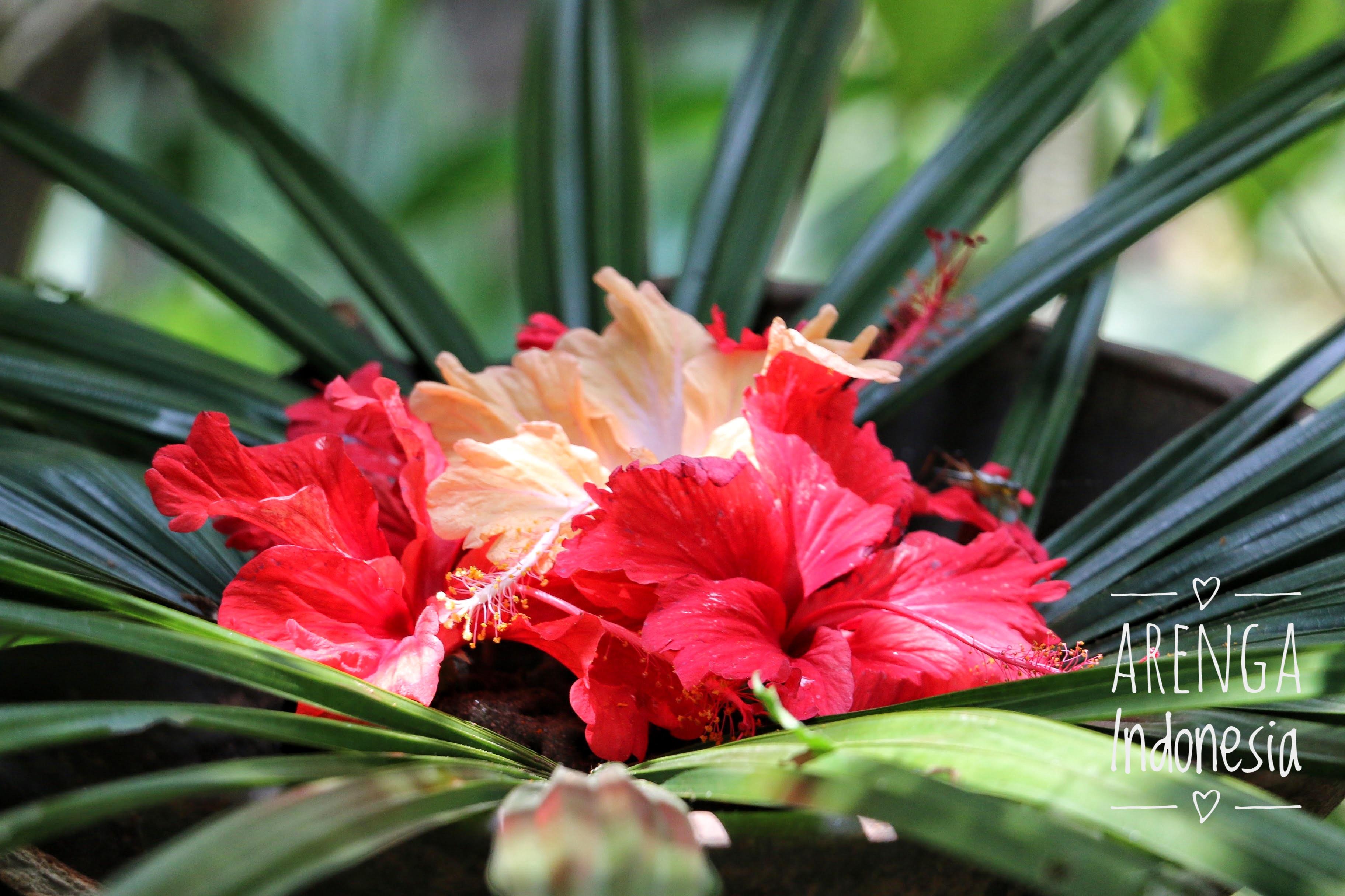 Mahkota bunga yang cemerlang untuk memikat kupu-kupu