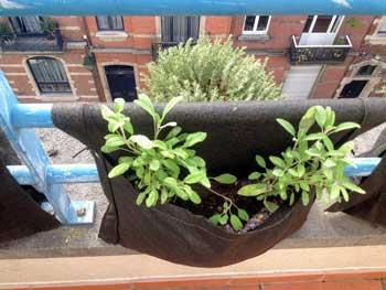 Potager sur votre balcon