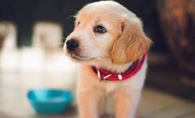 Surnom pour chien