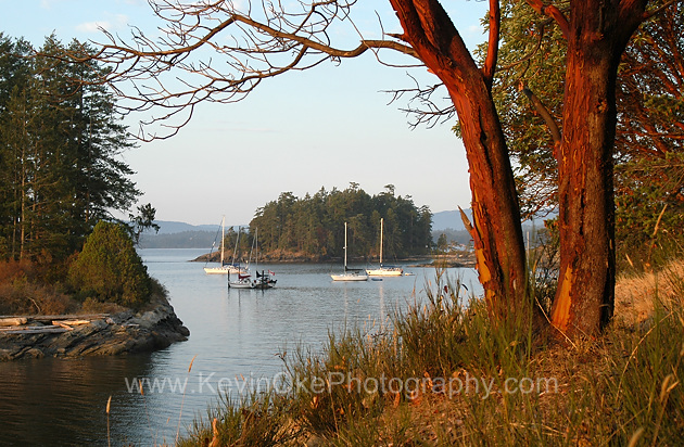 Arbutus trees at Portland Island, Gulf Islands National Park Reserve of Canada, Southern Gulf Islands, British Columbia, Canada.Portland Island, Southern Gulf Islands, British Columbia, Canada.
