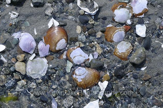 Clam shells, Sidney Spit, Gulf Islands National Park Reserve of Canada, Sidney Island, British Columbia, CanadaSidney Spit, Gulf Islands National Park Reserve of Canada, Sidney Island, British Columbia, Canada