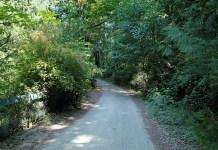 Tree lined roads near Burgoyne Bay, Salt Spring Island, British Columbia