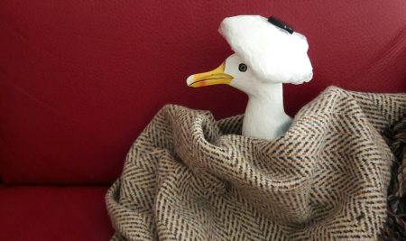 Seamus the Seagull with icepack on head