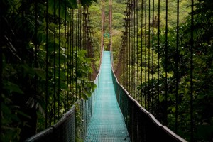 Costa Rica - hanging bridge in the costa rican jungle