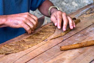 making of cuban cigar