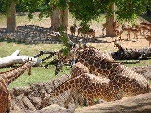 bishops zoo 009