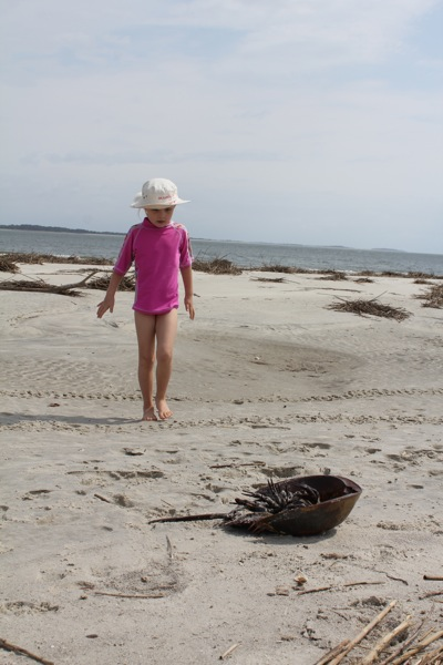 Bad Day for the Horseshoe Crab