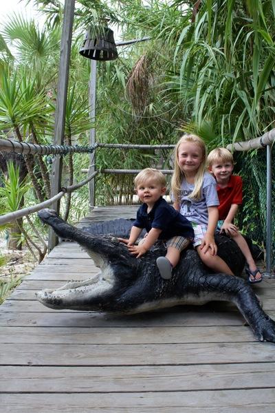 Taming the Gator