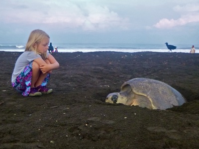 Watching a Turtle Lay Eggs