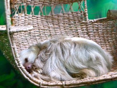 Millie the Sleeping Sloth