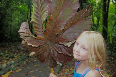 Nature's Umbrella