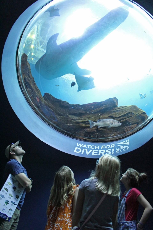 aquarium-bubble