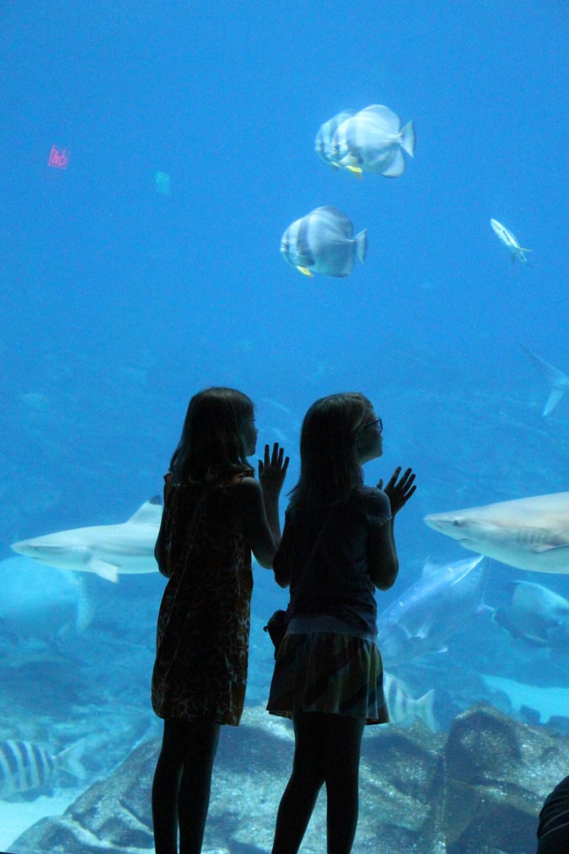 aquarium-miamor