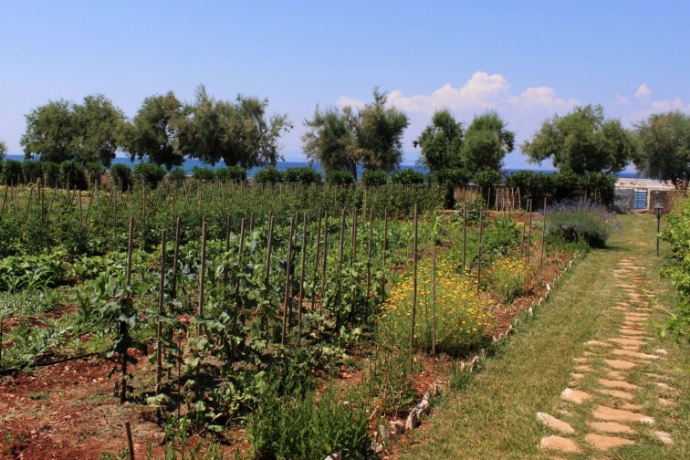 Path to the beach by the organic vegetable garden