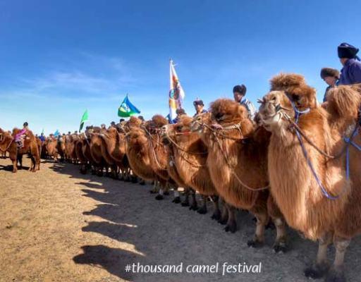 Mongolian Camel Festival