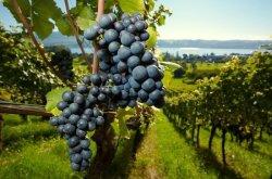 Burçak Desombre ile Bordeaux Turu
