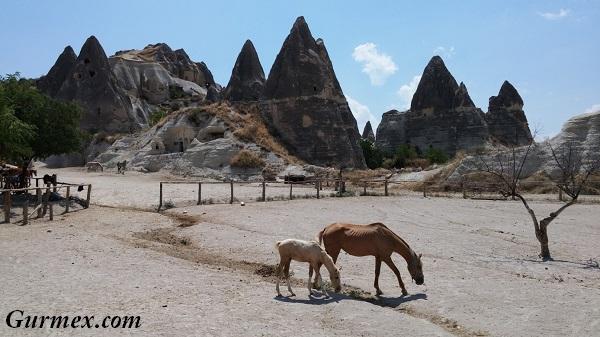 guzel-atlar-diyari-kapadokya