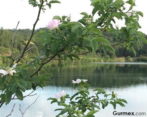 Bursa'da hafta sonu gezilecek yerler,Harmancık Karacaköy Göleti