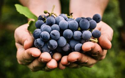 2020: the best Uruguay wines in decades
