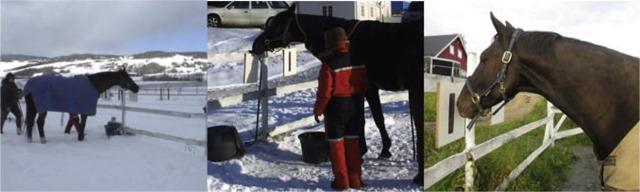 Test-couverture-chevaux