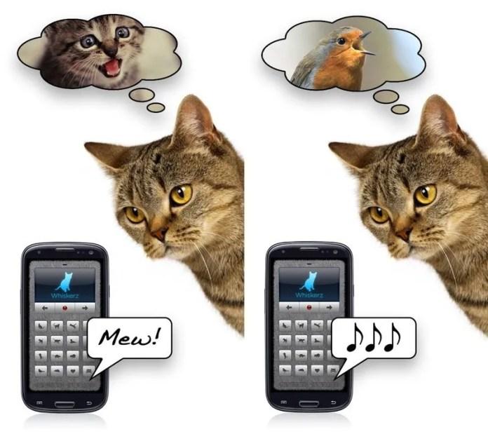 traductor-humano-gato