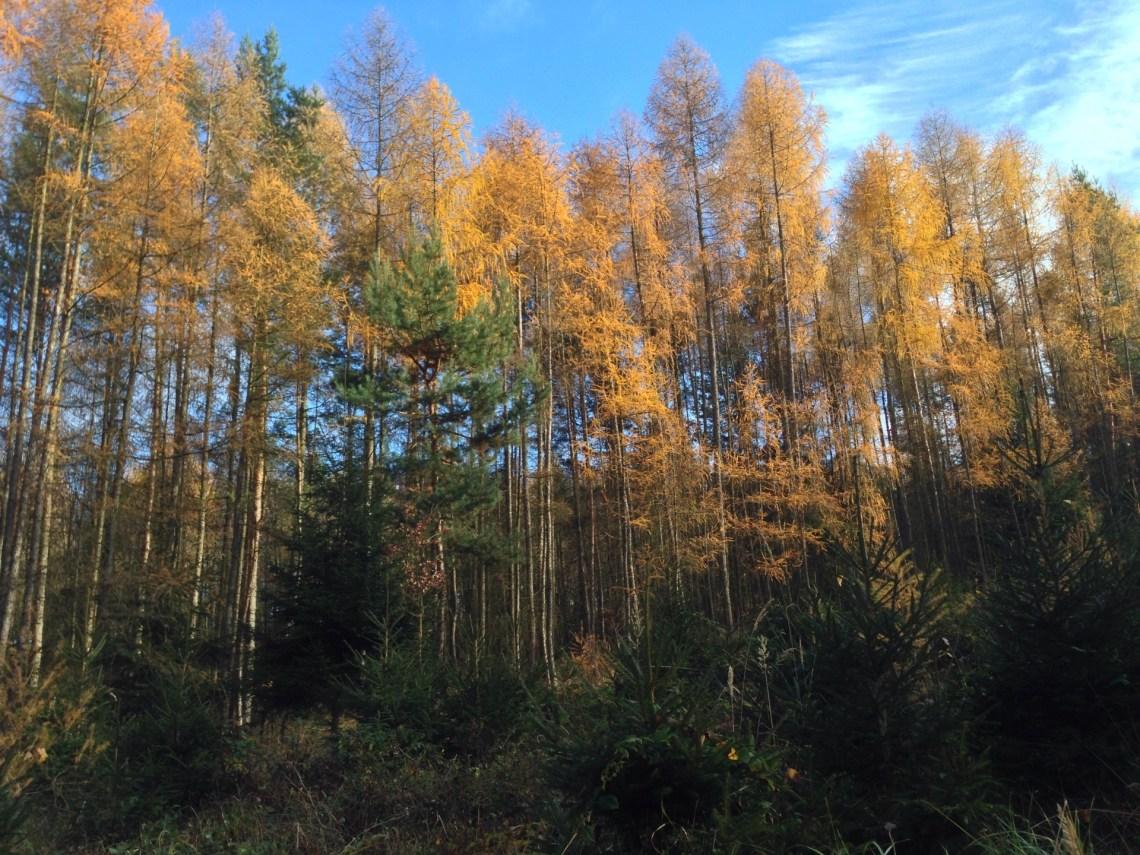 Trees, Czech Republic