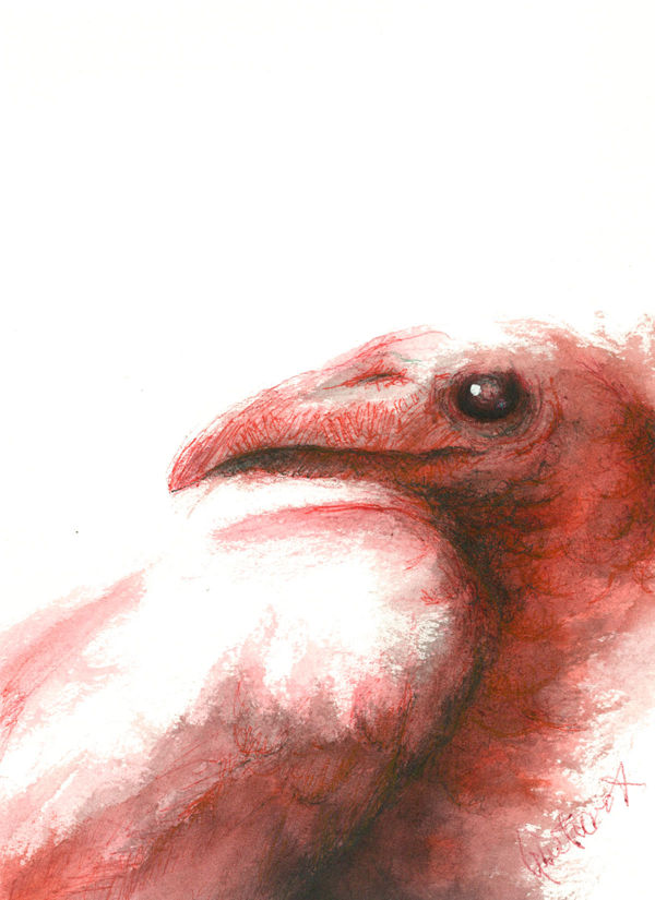 Dibujo: Biliares { Furias } A4 | por Gustavo A. Díaz G.