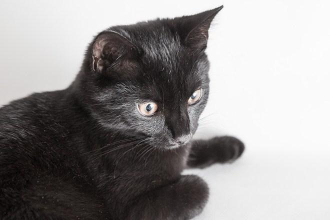 Schwarze Katze fotografieren mit Spiegelreflex-Kamera