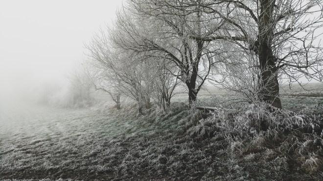 Kodak Ektra Snartphonefoto Nebel