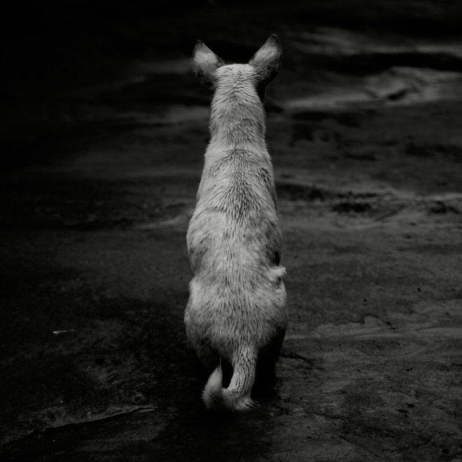 Schwarzweiß-Aufnahme eines sitzenden Hundes von hinten. von Thomas Kretschmann