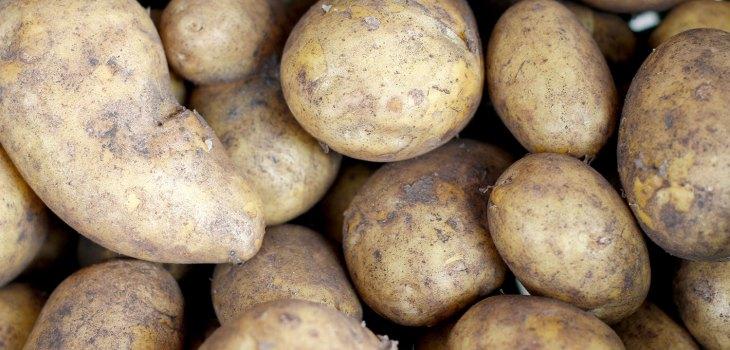 Bio-Kartoffeln vom Gut Onnau