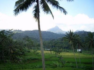 umwelt  Großer Erfolg für Ureinwohner Indonesiens Java Indonesien