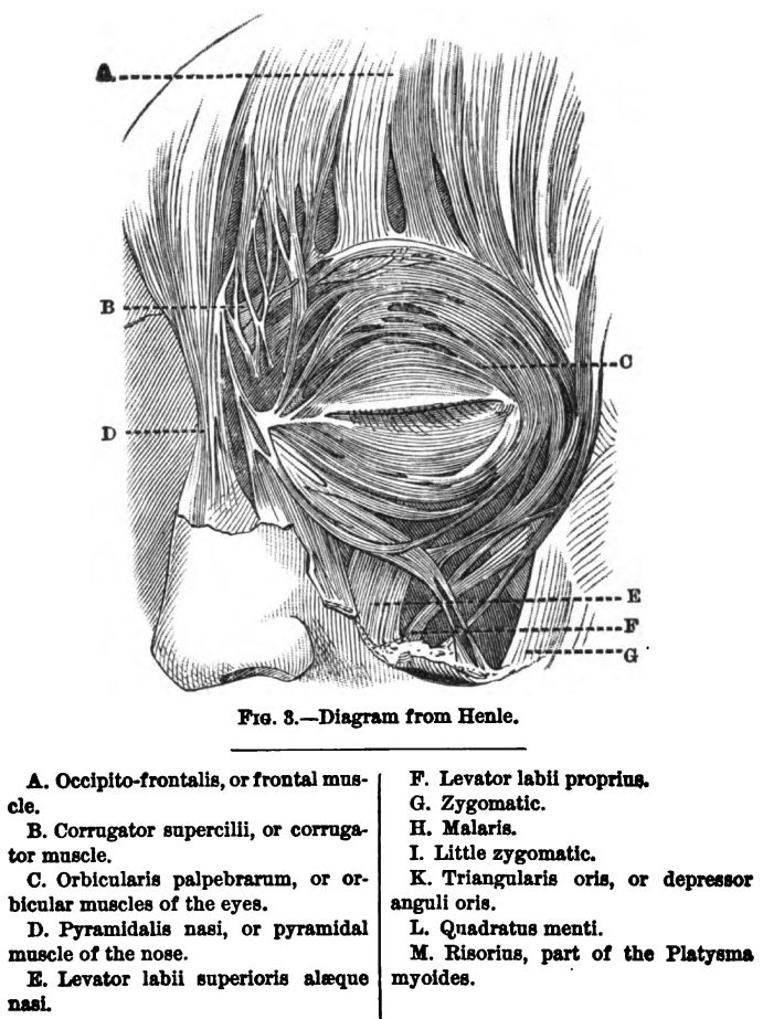 Muscles of the Human Face. Fig 3