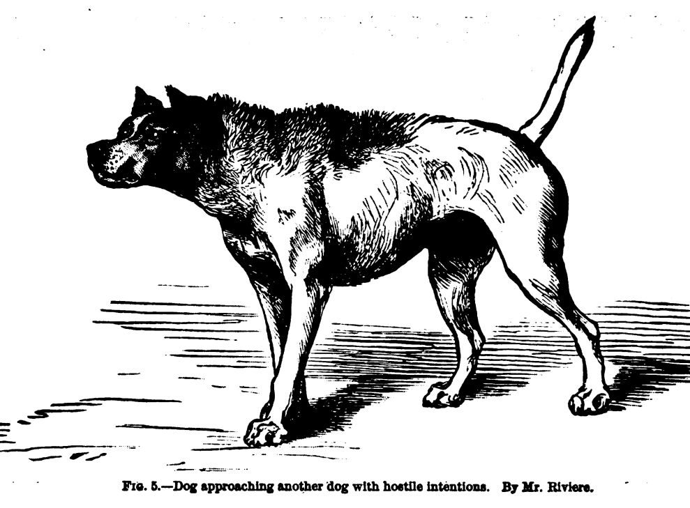 Dog in a Hostile Frame of Mind.  Fig. 5