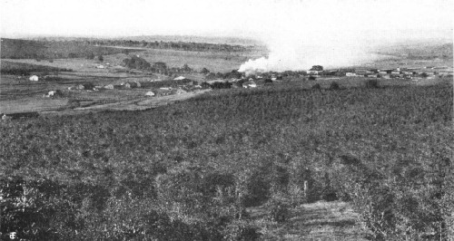 General View of Fazenda Dumont, Ribeirao Preto, São Paulo, Brazil