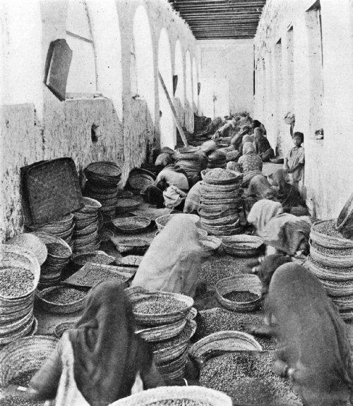INDIAN WOMEN CLEANING MOCHA COFFEE IN AN ADEN WAREHOUSE
