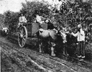 Coffee-Carrying Cart, Guatemala