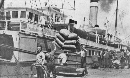 Discharging Coffee From a Steamer Just Arrived From Central America
