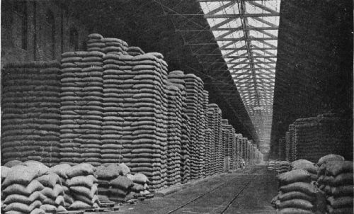 Green Coffee Stored on the Docks at Havre, France